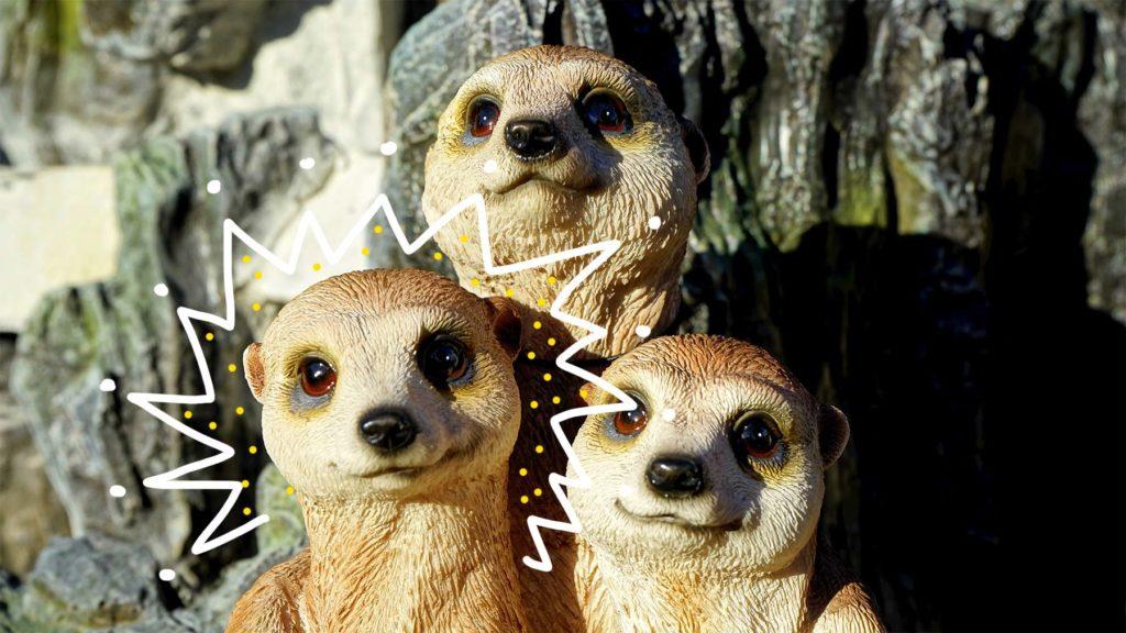 Tre surikater, en med gloria