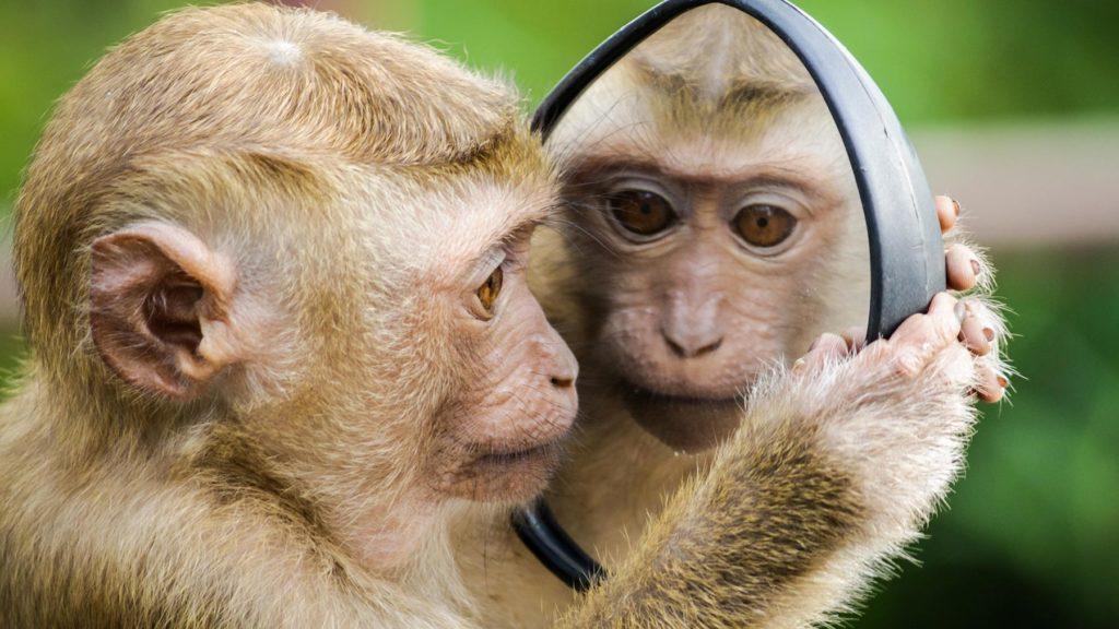 Ett djur som speglar sig