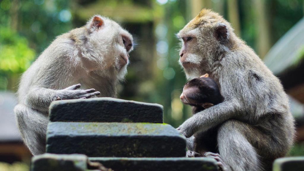 svara-samtal-apor-pratar