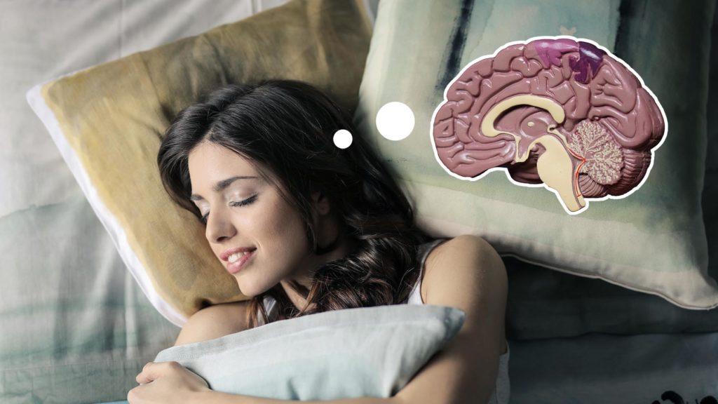Djupsömn skyddar hjärnan mot känslomässig stress.