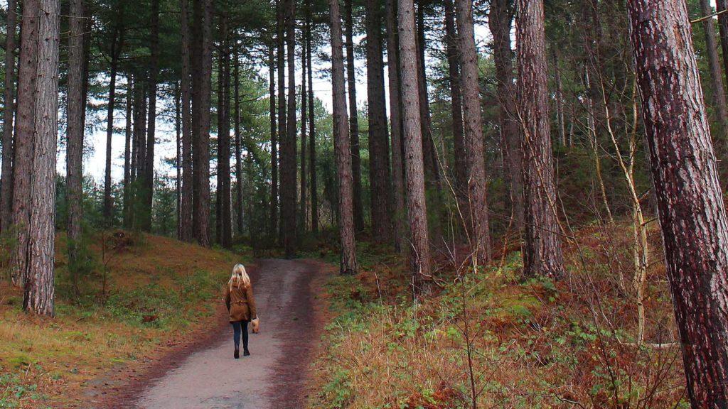 Stressad? Sök upp en urskog.