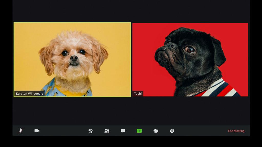 Två hundar i videokonferens...