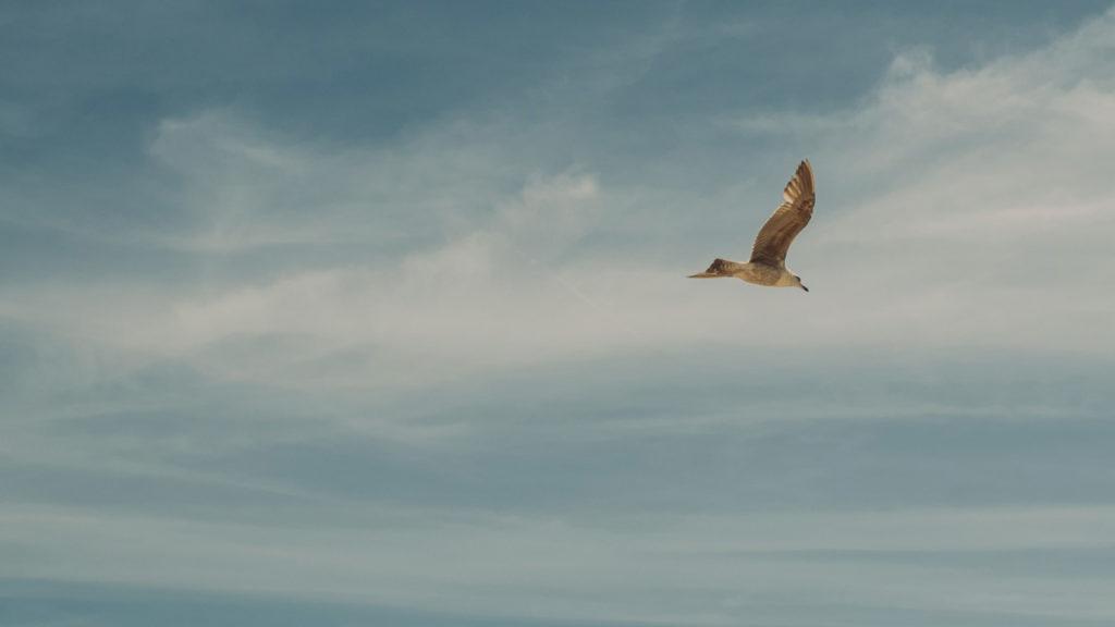Fågel mot molnig himmel