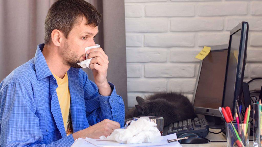 Pälsdjursallergiker på kontor