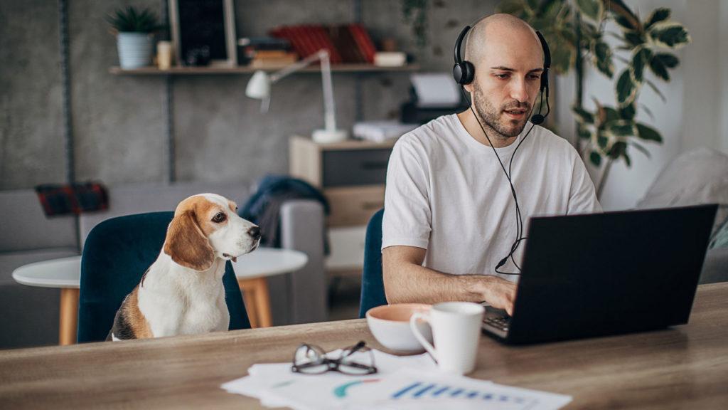 Hund som sitter bredvid person som jobbar på kontoret