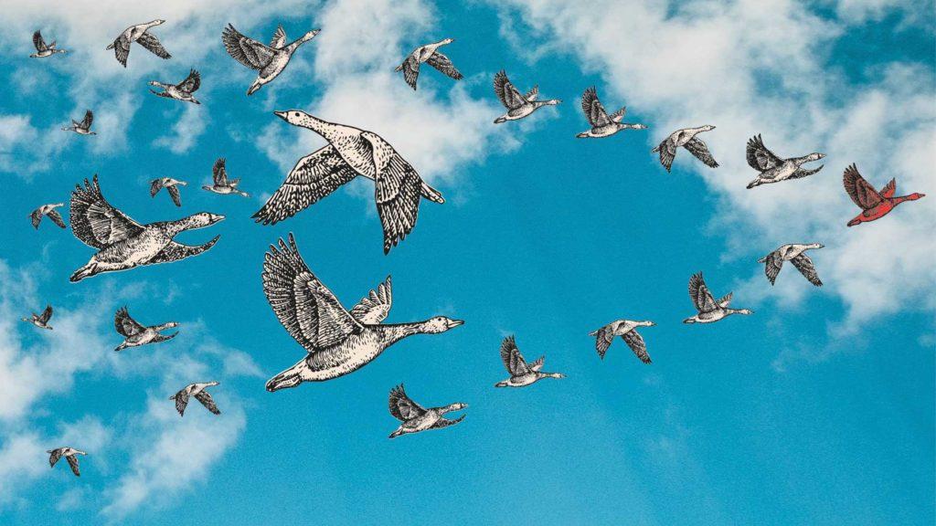 En ledarfågel som leder många andra fåglar